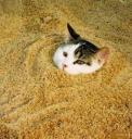 20647_s__funny_cats_veselye_stop_kadry_foto_16.jpg