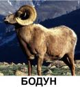 26422_s__vnimaem_novye_smysly_slov_i_kreativim_svoi_13.jpg